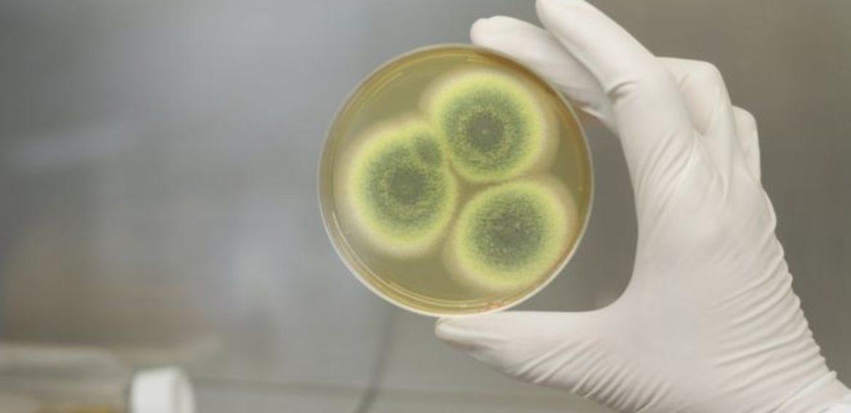 How economics killed the antibiotic dream