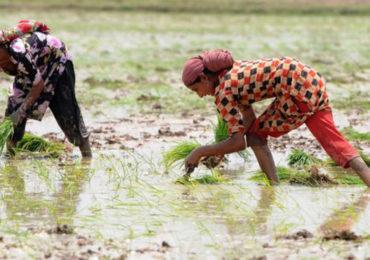 Food trade drains global water sources at 'alarming' rates